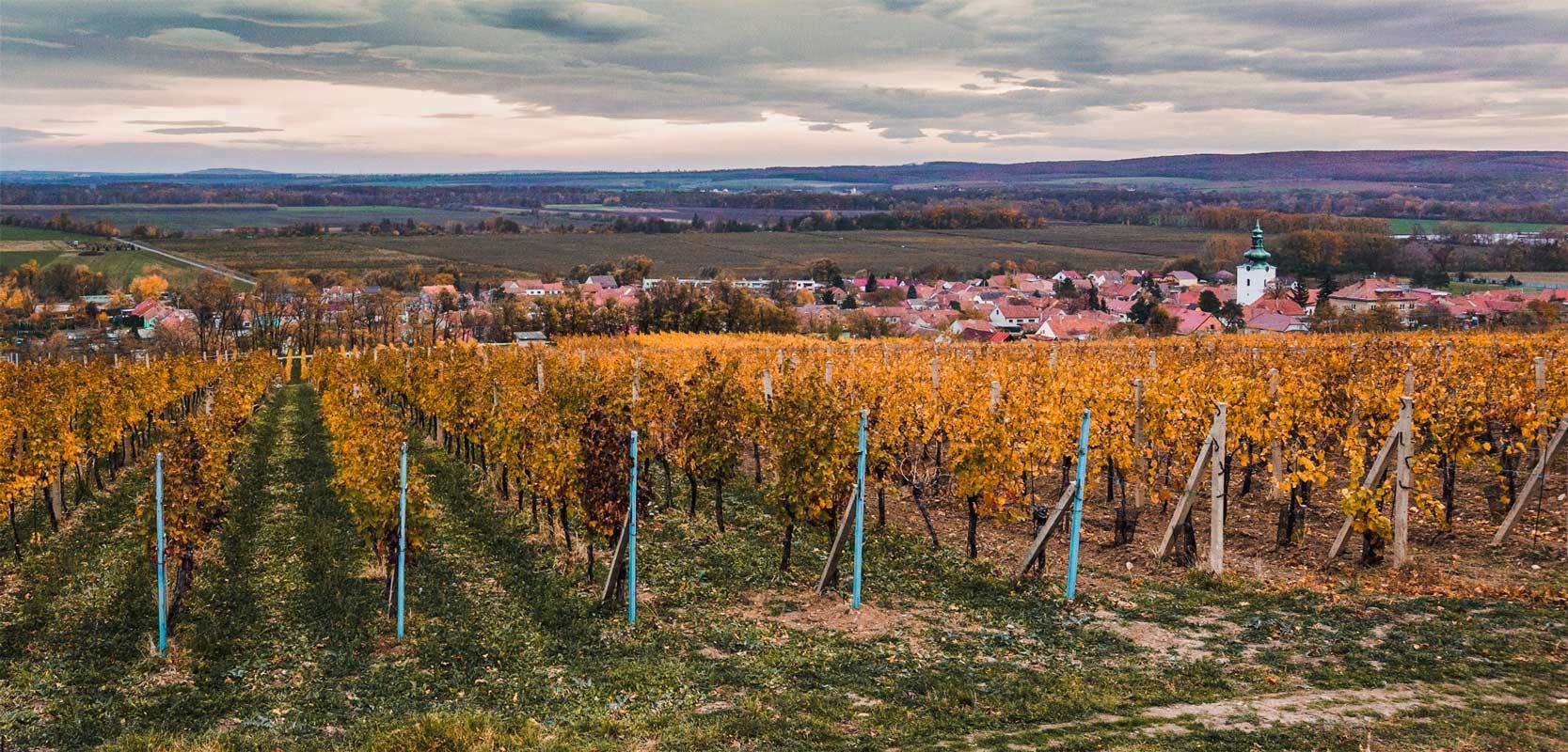 vinarstvi-pritluky-zdenek-bukovsky-vinohrad